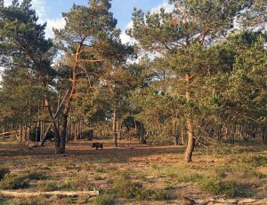 Best day trips from Amsterdam | Hoge Veluwe National Park